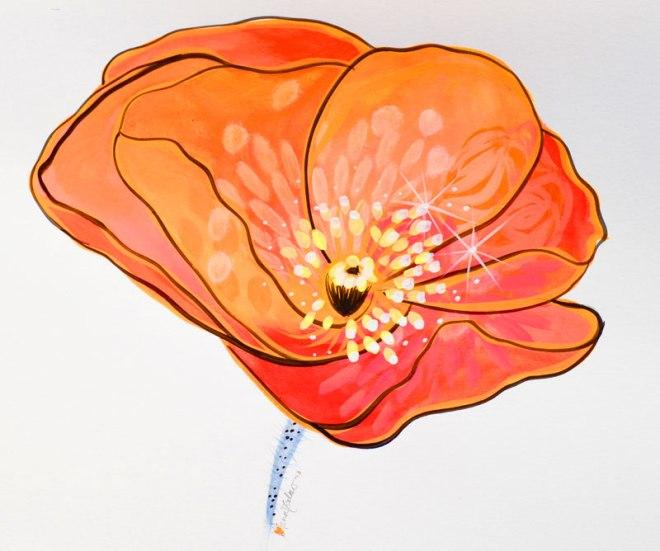 little orange poppy