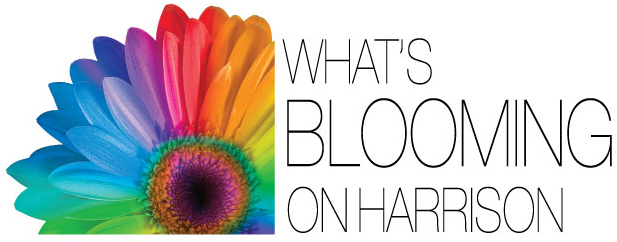 What's-Blooming-Logo (1)