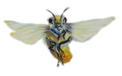 Honey Bees have more of a cat-like furry look https://www.kickstarter.com/projects/ryanfalenlee/rivendell-apiaries